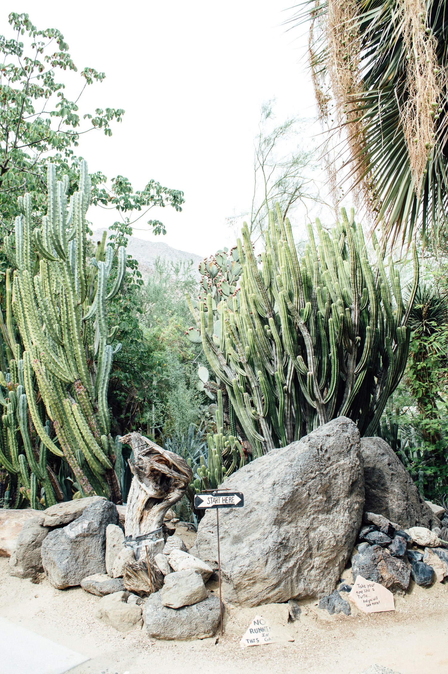 Moorten Botanical Gardens Palm Springs California Weekend 2 ...