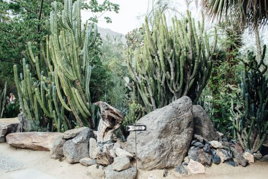 Moorten Botanical Garden, Palm Springs