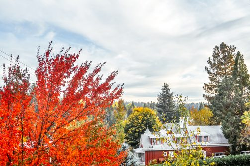 Nevada City in the Fall